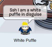 White Puffle.